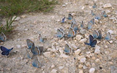 Harnessing Butterflies